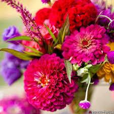 بالصور خلفيات ورود , اجمل صور الازهار الرائعه unnamed file 110