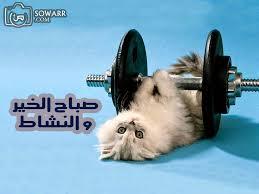 بالصور صباح الخير مضحكة , اضحك من قلبك unnamed file 300