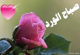 صورة صباح الورد للورد , صور جميله جدا بالورد