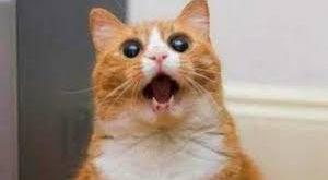 صوره قطط مضحكة , اجمل صور القطط