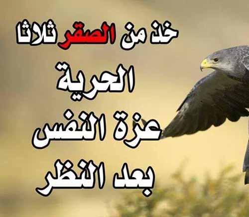 بالصور اشعار قصيره , كلامات صادقه ومعبره بشده 1955 9