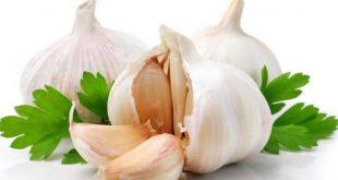 بالصور فوائد اكل الثوم , معلومات مهمه للصحه 1684 2 310x165
