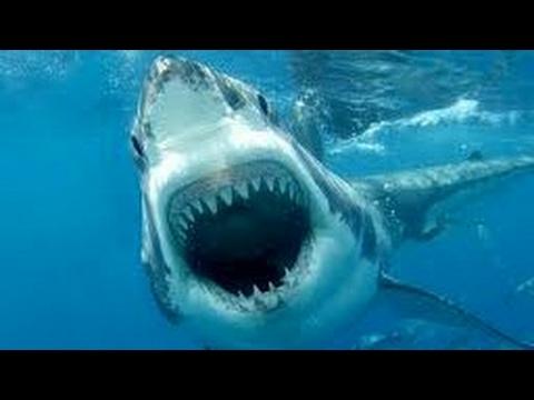 صور صور سمك القرش , صور مرعبه جدا