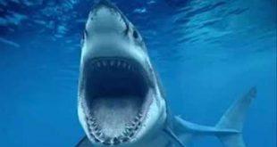 صوره صور سمك القرش , صور مرعبه جدا