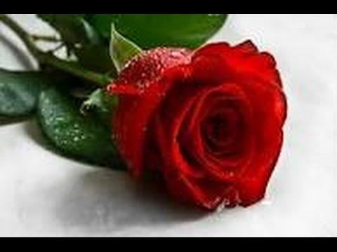 بالصور اجمل صور ورد , ازهار وورود تجنن 3472 1