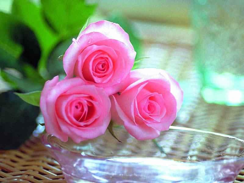 بالصور اجمل صور ورد , ازهار وورود تجنن 3472 2
