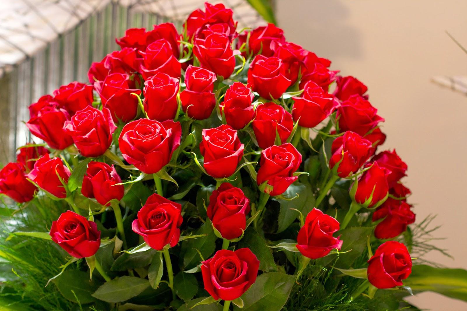 بالصور اجمل صور ورد , ازهار وورود تجنن 3472 6