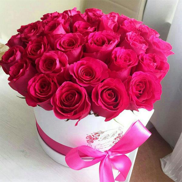 صور احلى صور ورد , الورود رمز الحب والمشاعر