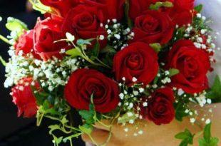 صوره احلى صور ورد , الورود رمز الحب والمشاعر