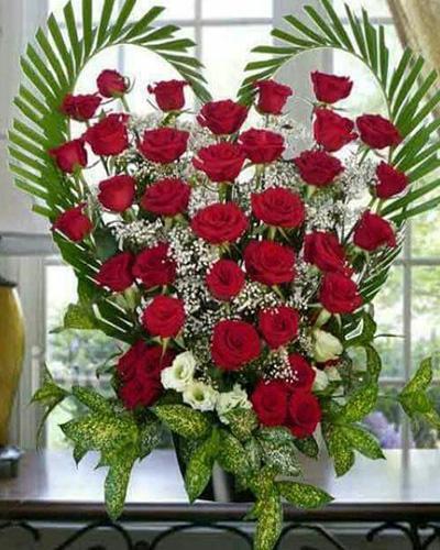 بالصور احلى صور ورد , الورود رمز الحب والمشاعر 3597 2