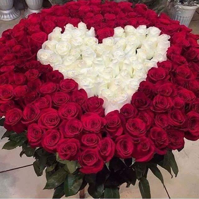 بالصور احلى صور ورد , الورود رمز الحب والمشاعر 3597 4
