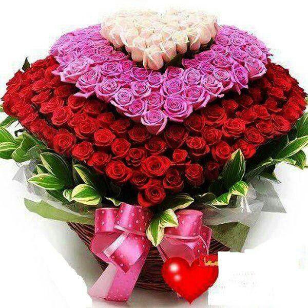 بالصور احلى صور ورد , الورود رمز الحب والمشاعر 3597 5