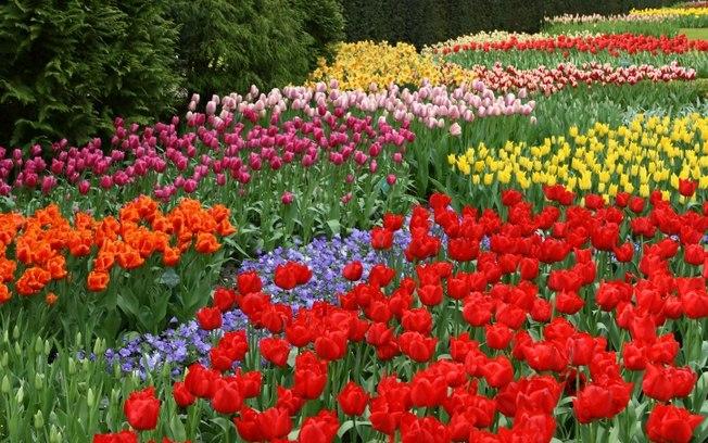 بالصور احلى صور ورد , الورود رمز الحب والمشاعر 3597 7