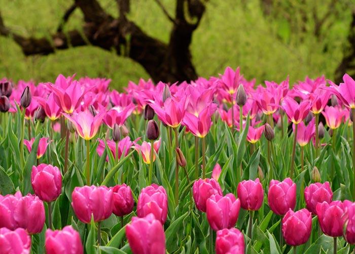 بالصور احلى صور ورد , الورود رمز الحب والمشاعر 3597 8