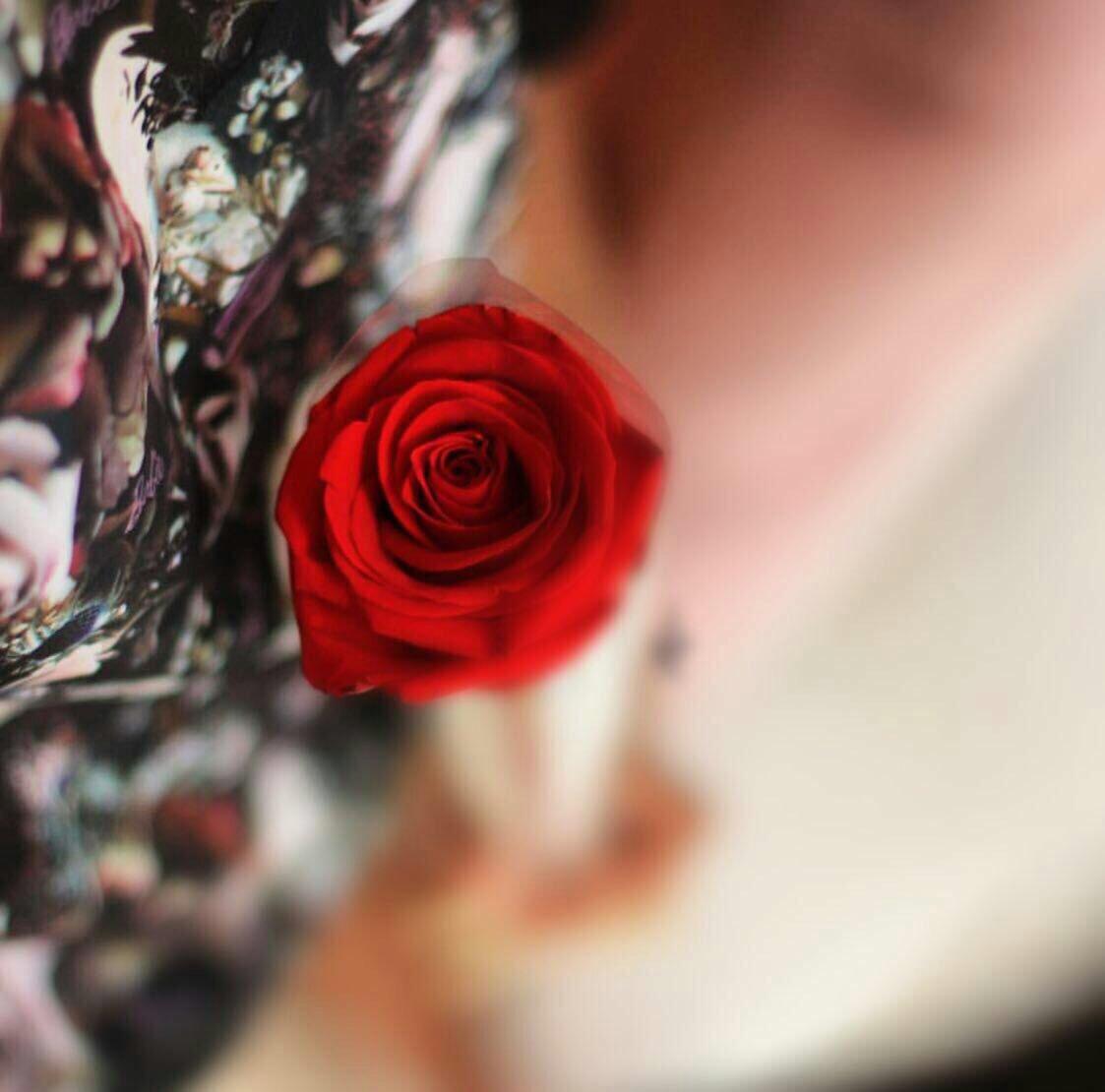 صور صور حب جديده , اجمل مظاهر الحب في صورة