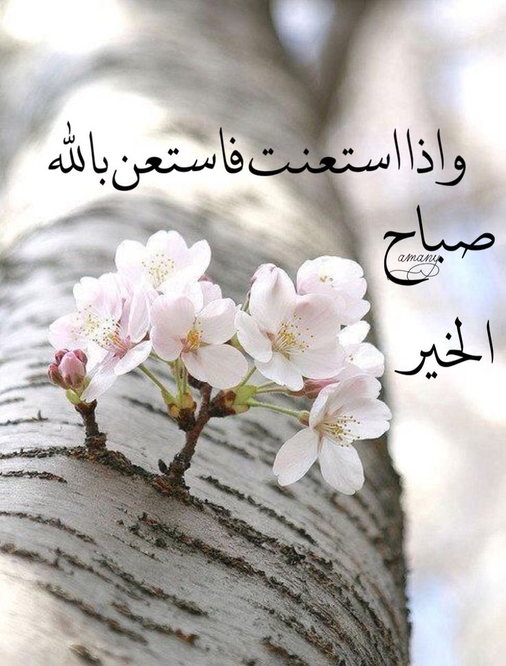 صورة رسائل صباح الخير , ابداء يومك برسالة حلوة عن الصباح