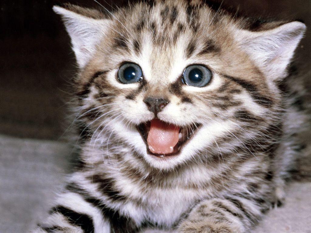 صورة صور قطط , اجمل صور لقطط
