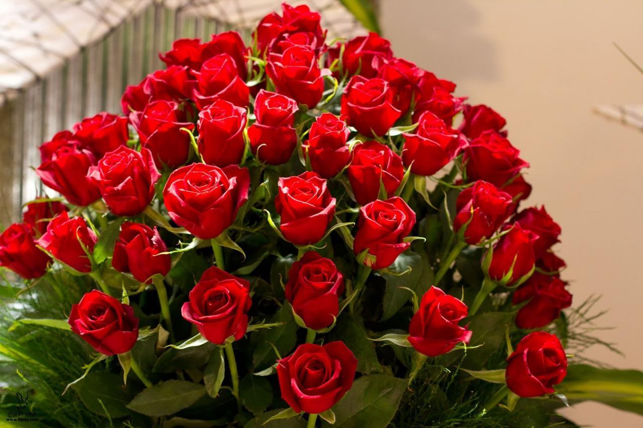 صورة صور احلى ورد , ما اجمل الورد