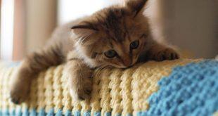 صور اجمل صور قطط , صور قطط كيوت
