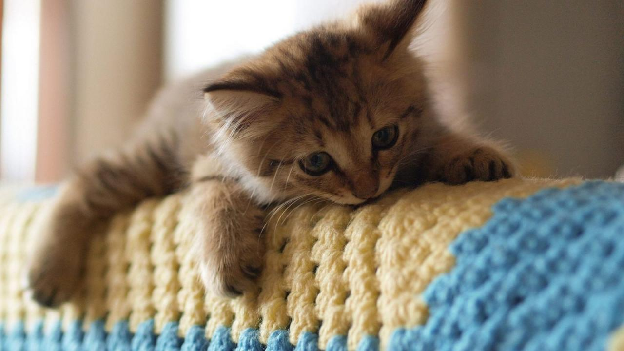 صورة اجمل صور قطط , صور قطط كيوت