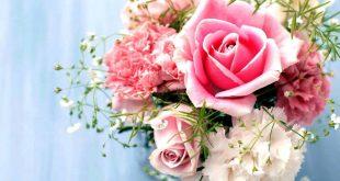 صورة صور ورود حلوه , الورد و جمال الواناته بالصور