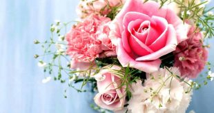 صور صور ورود حلوه , الورد و جمال الواناته بالصور