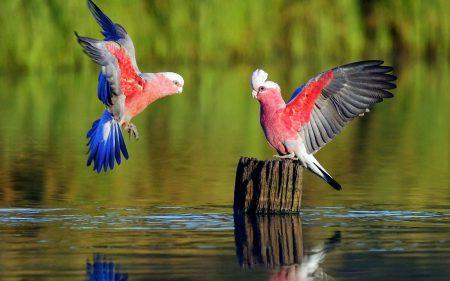صور صور طيور , الطيور فى حياة البيئة و الانسان