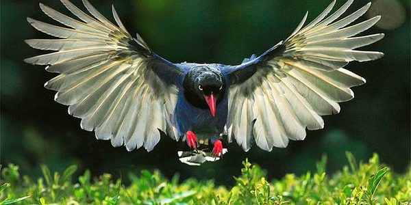 صورة صور طيور , الطيور فى حياة البيئة و الانسان