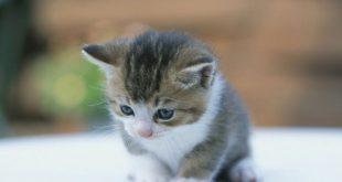 صور صور قطط صغيرة , القطط الصغيرة الجميلة