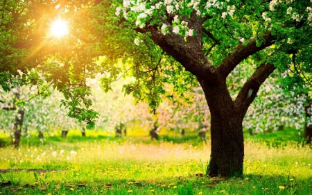 صور صور اشجار , صور احلى الاشجار