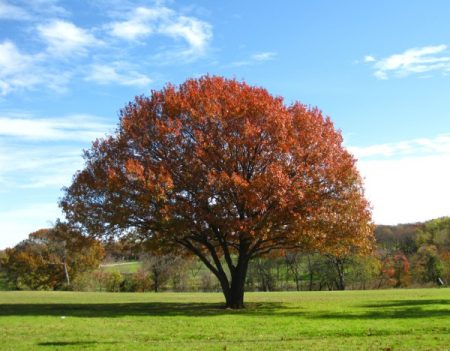 صورة صور اشجار , صور احلى الاشجار