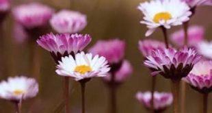 صورة صور زهور , اجمل صور لاجمل زهور