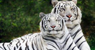 صورة صور حيوانات , حيوانات حول العالم