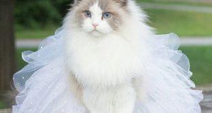 صور صور قطط كيوت , للقطط فوائد عديدة فى المنزل