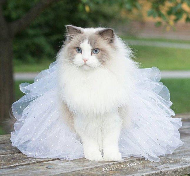 صورة صور قطط كيوت , للقطط فوائد عديدة فى المنزل