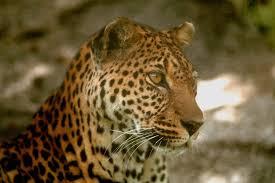 صورة اجمل حيوان في العالم , حيوانات تهتز القلوب لرؤيتها من شدة جمالها