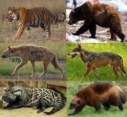 صورة حيوانات اكلة اللحوم والنباتات , تعرف على الحيوانات التي تاكل لحوم ونباتات