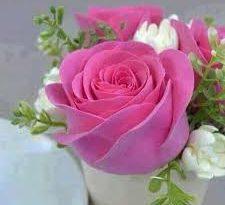 صورة ورود عيد ميلاد سعيد , اجمل الورود التي يتم تقديمها في عيد الميلاد