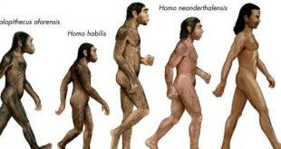 صورة ما هي نظرية داروين , ماذا تعرف عن نظرية داروين