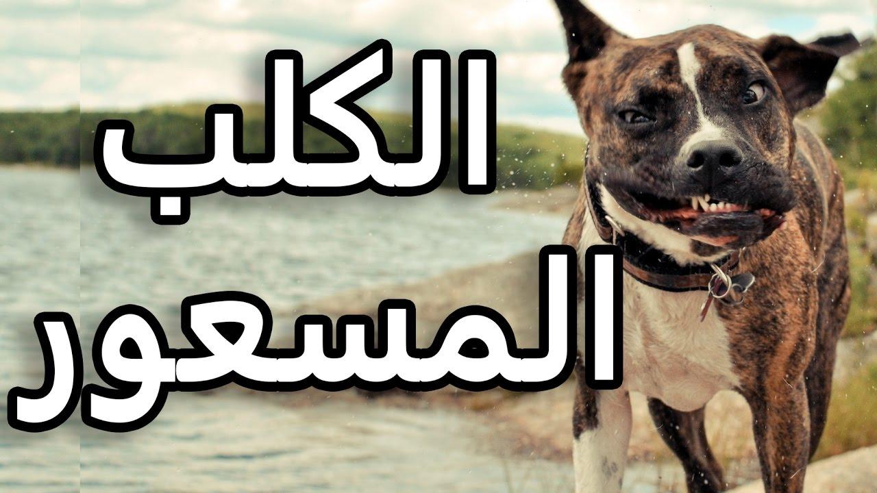 صورة معنى الكلب العقور , ما معنى الكلب العقور