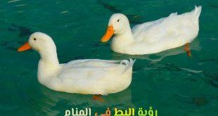 صور رؤية البط في المنام , ما هو تفسير رؤية البط في المنام