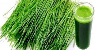 صورة عشبة القمح، استخدمات عشبة القمح لتقوية المناعة