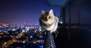 صورة خلفيات قطط ,اروع خلفيات قطط متنوعه