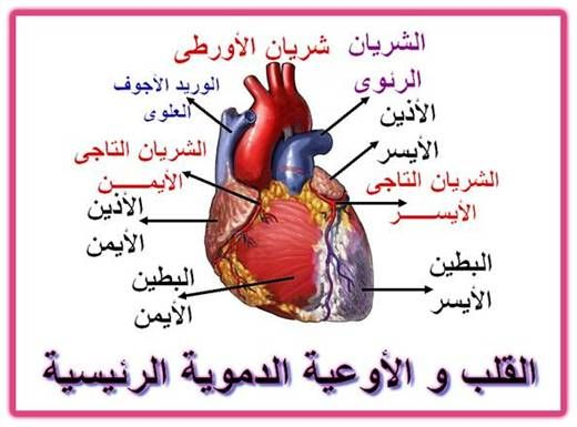 صورة استخدمي الدواء هذا يعالج القلب ,علاج مرض القلب
