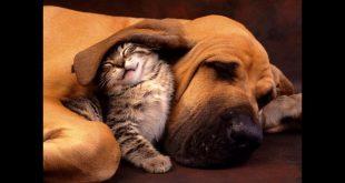 صورة قطط وكلاب ,افضل انواع القطط والكلاب