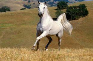 صورة واو شوفه اجمل الحصان الرائع ,اجمل حصان في العالم
