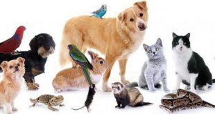 صورة حيوانات اليفة ,ما رايت اجمل من هذا الحيوانات المتنوعه