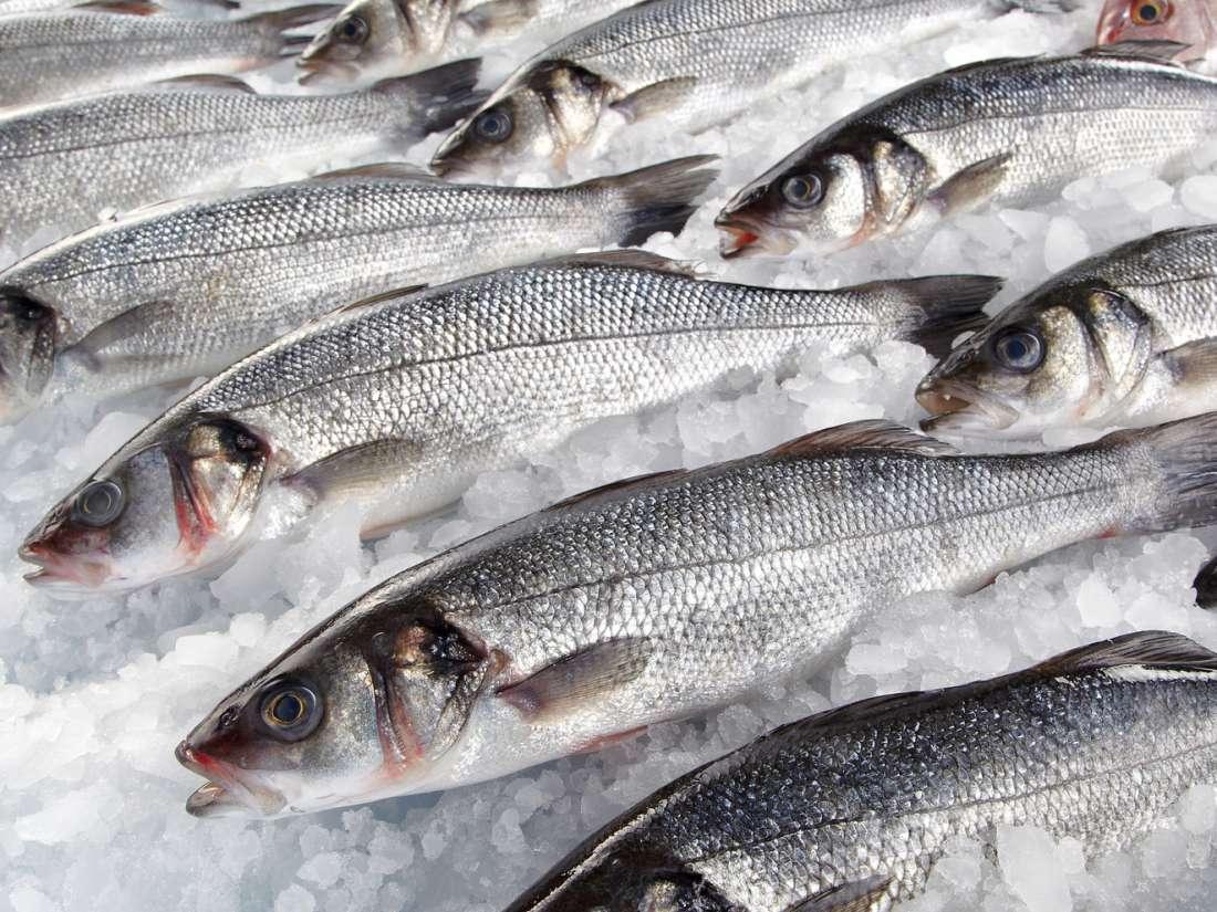 صورة رؤية السمك في المنام للحامل , تفسير حلم السمك فى المنام 9386 1