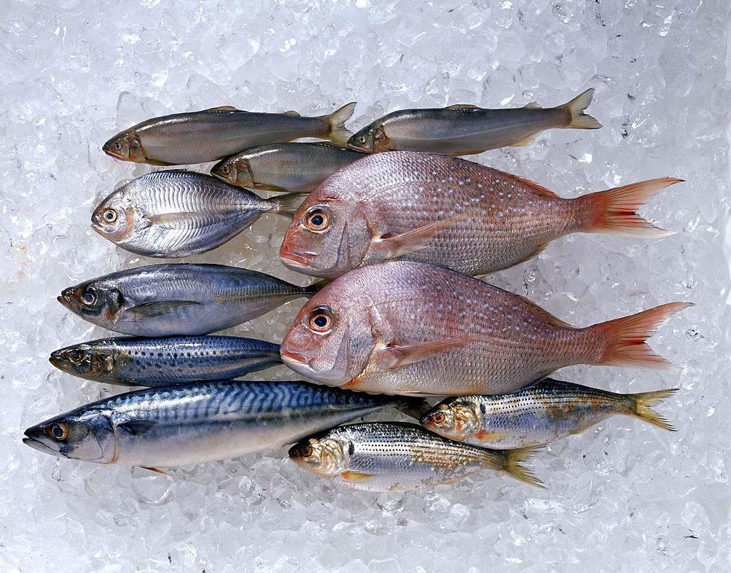 صورة رؤية السمك في المنام للحامل , تفسير حلم السمك فى المنام 9386 2